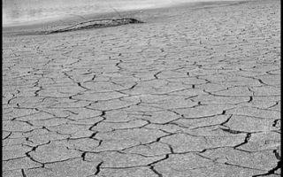 Кофе подорожает из-за засухи
